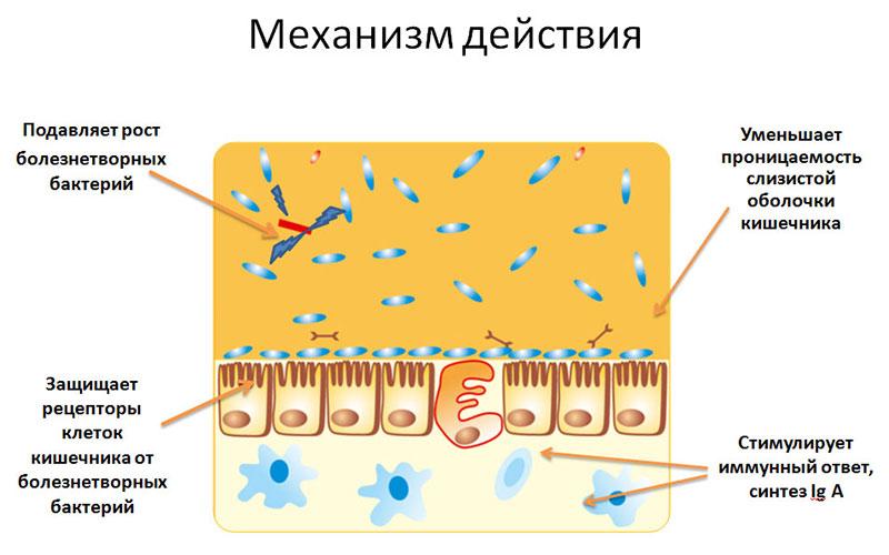 Действие пробиотиков