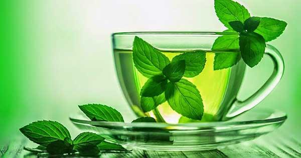 Чай с мятой при грудном вскармливании