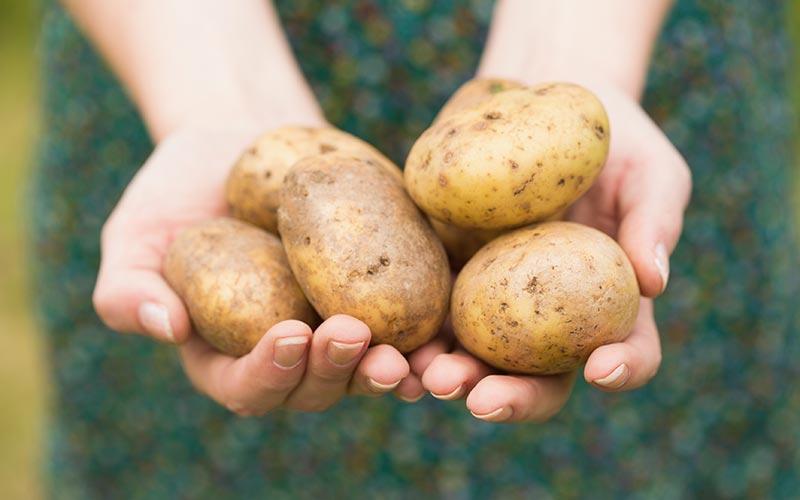 свежай картошка